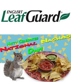 67 Best Squirrel Memes Images Squirrel Memes Chipmunks