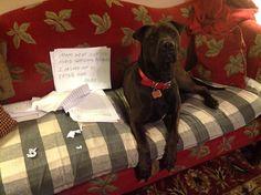 the teacher's dog ate my homework thats a new one
