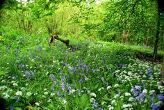 The UK's leading woodland conservation charity. Help us plant trees, protect woods and inspire people to enjoy the nature on their doorstep. Wood Detail, Trees To Plant, Conservation, Woodland, Natural Beauty, Woods, Awesome, Amazing, Nature