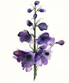 Delphinium - botanical print, watercolor botanical, watercolor flowers, cottage chic