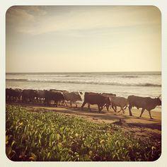 """rush hour"" in Nicaragua - Amigas Surf And Yoga Retreats's Instagram photos"