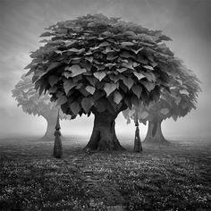 Forgotten woods. by © Leszek Bujnowski aka ~Alshain4. S)