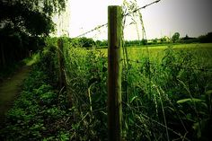 The Wire by girlsteve, via Flickr