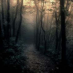 It feels that you're walking into darkness until you see the light beyond the trees.