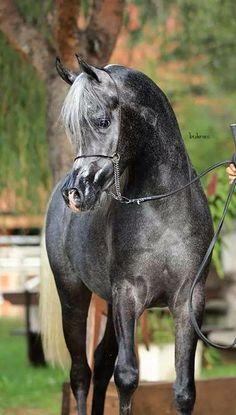 Zephyr, my horse.