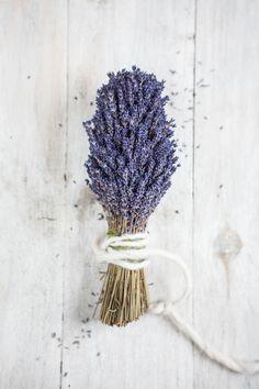 Lavendel für selbst gemachten Lavendelsirup Blog, Beautiful, Drinking, Blogging