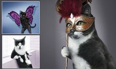 These cats really ARE glamour pusses