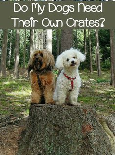 Do your dogs need their own crates? For the most part, yes. Find out why, plus check out the one time the answer may be no!