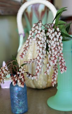 Sweet pieris sprigs (Pieris japonica ' 'Dorothy Wyckoff') - straight from the garden to Ellen Spector Platt's little bud vases. Springtime~
