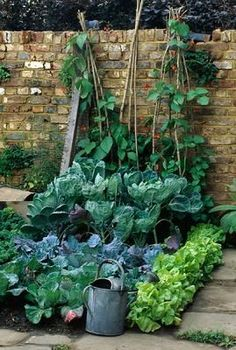 PAVING AROUND BED OF LETTUCE & CABBAGES,RUNNER BEANS IN B/G THE IMPERIAL WAR MUSEUM'S GARDEN.CHELSEA'95.DES:SIR T.CONRAN