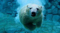 Animal-nature-2 | ADVENTURERS GUIDE
