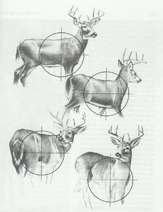 Deer hunting http://riflescopescenter.com/rifle-scope-reviews/