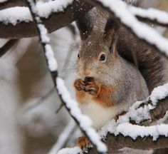 Squirrel by Vladimir Holodnitsky - Pixdaus