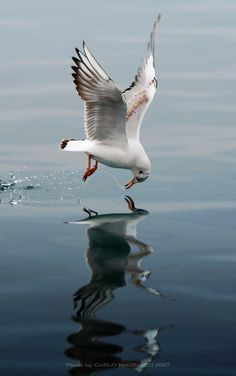 Seagulls are messengers from the Gods and bridge the gap between the living and spirit world.  Opening yourself to their energy enable you to communicate with the other side.
