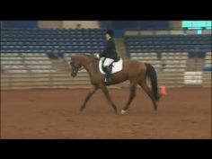 Dressage Exercises for Any Horse, Part 1 – America's Horse Daily | America's Horse Daily