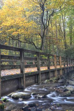 Fall hike in the Great Smoky Mountains National Park - Kephart Prong Trail
