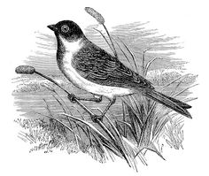 black & white bird image