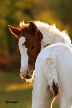 beautiful colt - or filly : ) except did you know they call baby girl horses colts sometimes, too?
