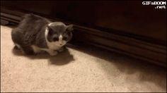¿Estás preparado para ver las fotos de gatos más espectaculares de esta semana? Ya está aquí!! GATORAMAAAA!!
