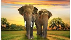 Canvas printing sydney, canvas wall art Australia, Custom Canvas Online offer door to door service worldwide, create your own now! Cheap Canvas Prints, Thailand Elephants, Elephant Sanctuary, Canvas Online, Elephant Family, Print Your Photos, Win A Trip, Custom Canvas, Photo Canvas