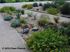 Shirley Fox's golden xeriscape garden in San Antonio | Digging