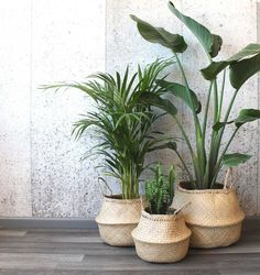 Modern hand-woven natural foldable sea grass belly basket/ wedding gift/laundry picnic storage basket/ Christmas gift in 2020 Plantas Indoor, Belly Basket, Decoration Plante, Basket Decoration, House Plants Decor, Decoration Inspiration, Bedroom Inspiration, Decor Ideas, Interior Plants