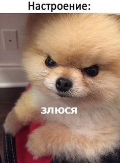 Cute Animal Pictures, Funny Pictures, Cute Baby Animals, Funny Animals, Cute Cats, Funny Cats, Hello Memes, Russian Memes, Cute Love Memes