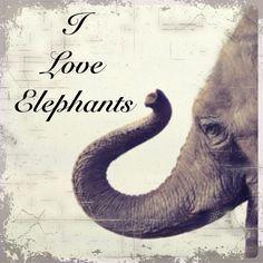 I LOVE ELEPHANTS!!!