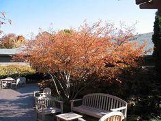 ft as understory. Fruit Trees, Shrubs, Floral, Garden, Flowers, Plants, Smooth, Garten, Florals