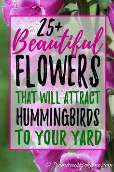 I love this list of plants that attract hummingbirds. Great ideas for flowers that can be added to your hummingbird garden whether it is in shade or sun, or even in pots. #fromhousetohome  #attractinghummingbirds #gardeningtipsandplants #gardeningideas #diyhomeandgarden