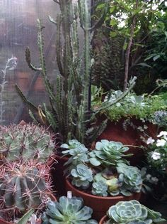 Succulents and cacti together.  Love it!