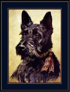 English-Picture-Print-Scottish-Terrier-Puppy-Dog-Dogs-Head-Vintage-Poster-Art