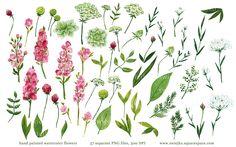 watercolor flowers, floral painting by swiejko on Creative Market