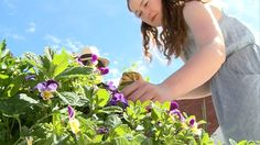 Urban gardens bloom in Melbourne's unused city spaces | Life and style | The Guardian #video