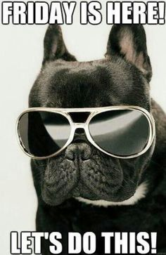 Friday is here quotes cute quote friday days of the week friday quotes french bulldog awesome and funny like it! Tgif, Happy Dance, Viernes Friday, Friday Images, Friday Pics, Friday Pictures, Dog Pictures, Animal Pictures, Childhood Movies