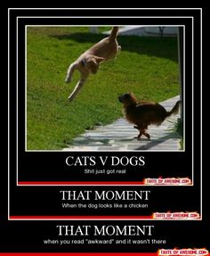 - That moment. Dog and Cat