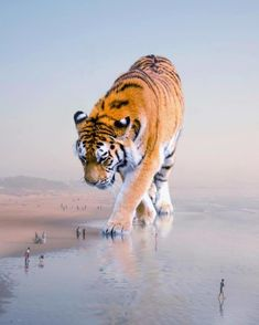 These Jaw-Dropping Photo Manipulations Imagine A World With Giant Animals Giant Animals, Big Animals, Animals And Pets, Surreal Photos, Surreal Art, Surrealism Photography, Animal Photography, Inspiring Photography, Photography Editing