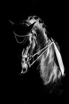 Photo by: Christèle Alphonse