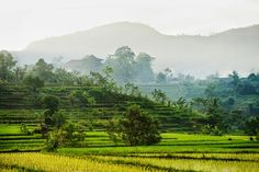 Bali Indonesia Holiday Travels: Sidemen Village Offers a Relaxing and Peaceful Atm...
