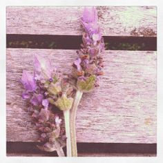 @Kathy Hackman Hutchison Kathy, I think you will like this blog.  This post especially has plenty of lavender pretties for your board.