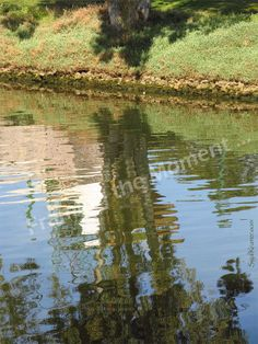 Floating Tree | Original Nature Fine Art Photography | Reflections | Tree | Blue | Green | water | fPOE