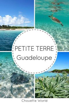 Petite Terre in Guadeloupe: Traumkreuzfahrt und Schnorcheln - Travel Pack Snorkeling, Les Bahamas, Excursion, Blog Voyage, Central America, Dream Vacations, Caribbean, Travel Destinations, Cruise