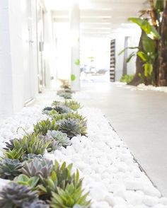 Road with succulents