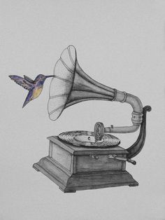 just-art:Music for Hummingbirds by Marcelo Ferrer Tatouage Gramophone, Gramophone Tattoo, Gifs, Record Player Tattoo, Art Triste, Types Of Visual Arts, Animation Stop Motion, Music Tattoo Designs, Black Ink Tattoos