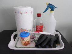 My homemade kit for removing dog urine odor from carpet!