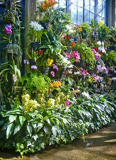 Wall of orchids on display in the permanent orchid room at Longwood.  The aroma is amazing.