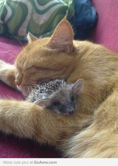 Kitty and Hedgehog (my ideal pet family) so cutee!