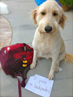 The Best of Dog Shaming - Part 19 (21 pics) | Mommy Has A Potty MouthMommy Has A Potty Mouth