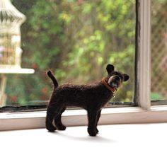 Dog - Chester