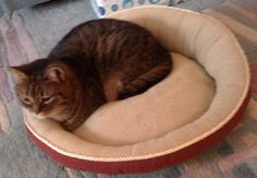 ♥ ♥ Kairi Kat, the oldest of my 5 grand-kitties, is a rescue. ♥  (I love cats and kittens.)